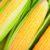 Warzywa owocowe cz. 1