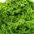 Warzywa liściowe cz. 1