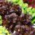 Warzywa liściowe cz. 4