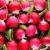 Warzywa korzeniowe cz. 5