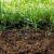 Zasilanie drzew owocowych cz. 1