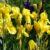 Kwiaty letnie cz. 3